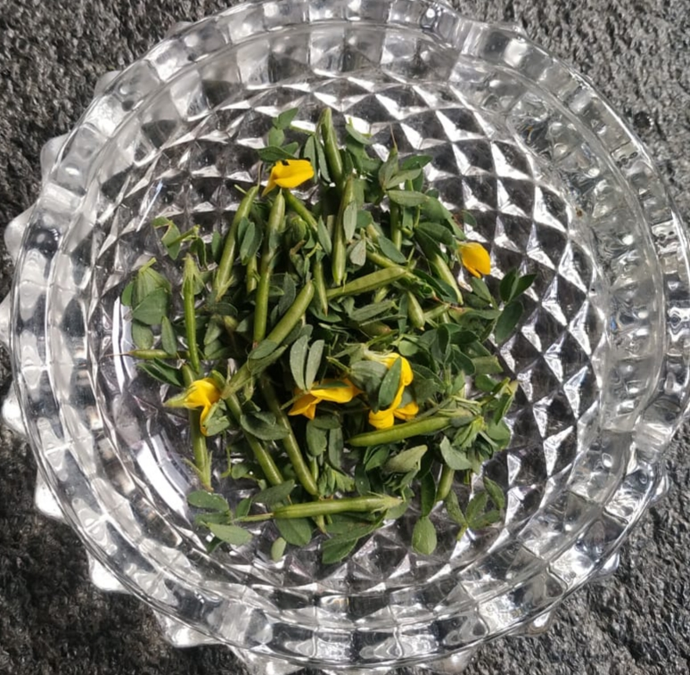 Lotus corniculatus L.- Peula ghaa (पीउला घा)
