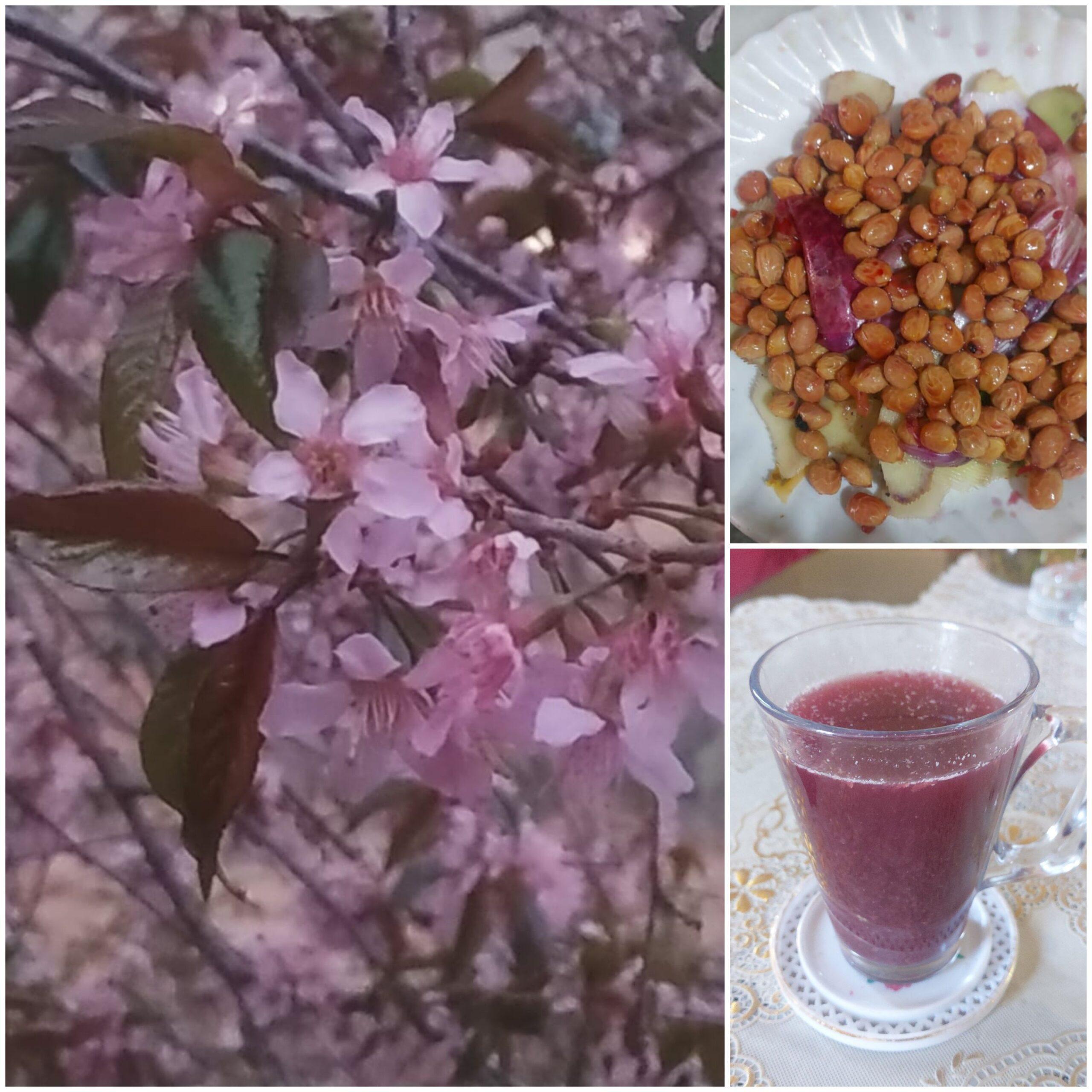 Prunus cerasoides var. majestica (Buch. -Ham.ex D. Don))- Paja (पाजा)