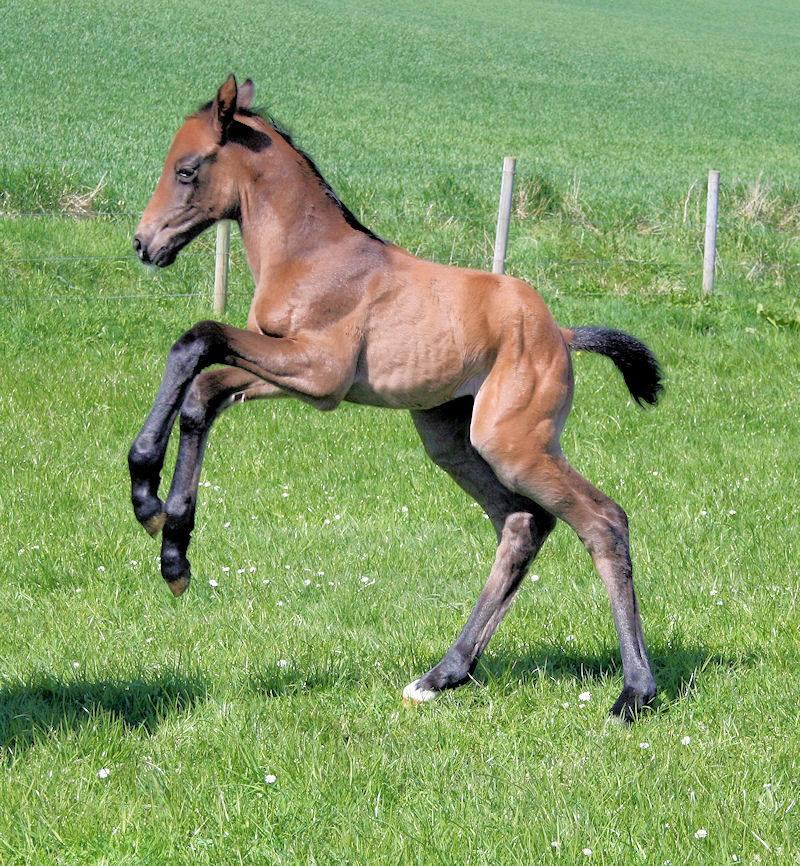 Diva as foal 2