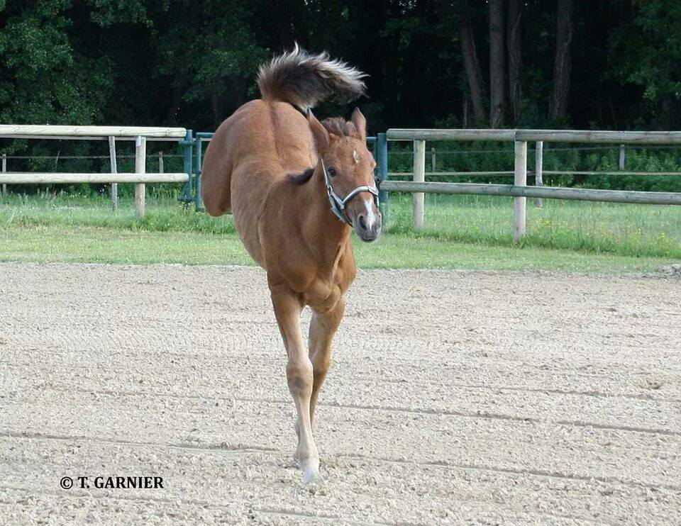 Emagination at Foal Show 2nd 7.75 marks. 10 July 2014