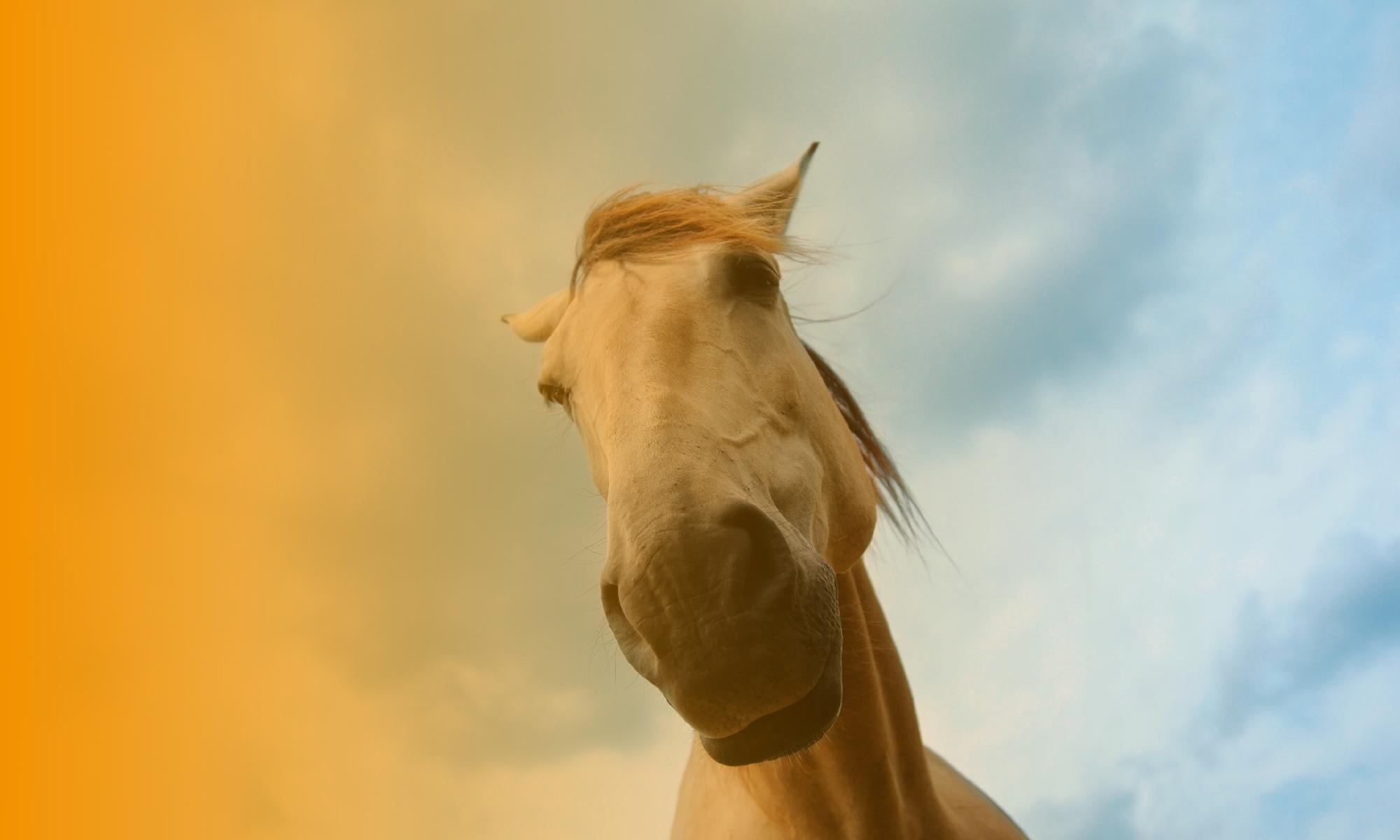 Pferde-gestütztes Coaching