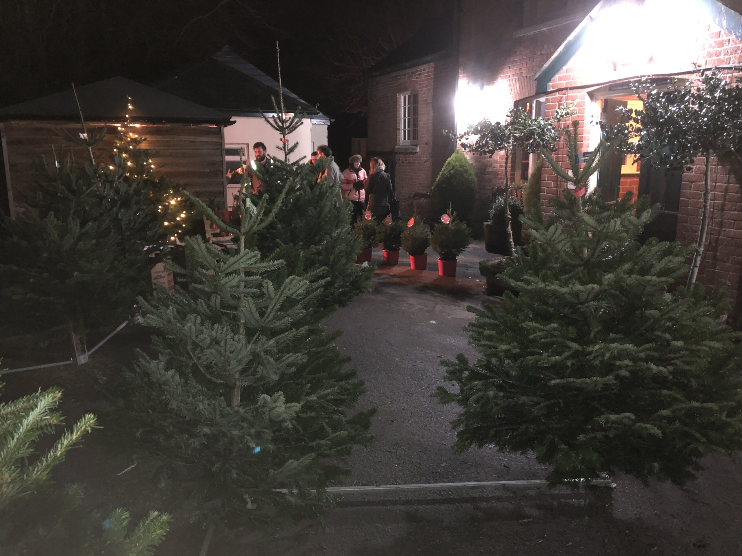 Christmas Tree Sale
