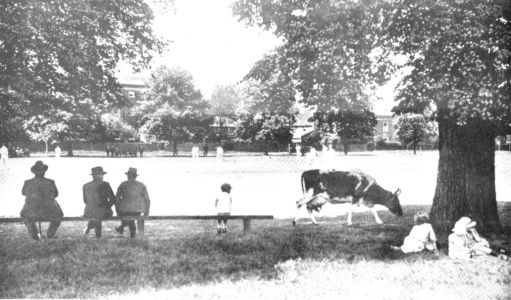 Cricket on Ham Common 1930