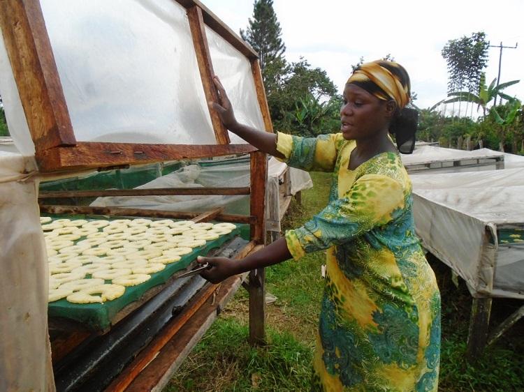 Solar dryer, agritec