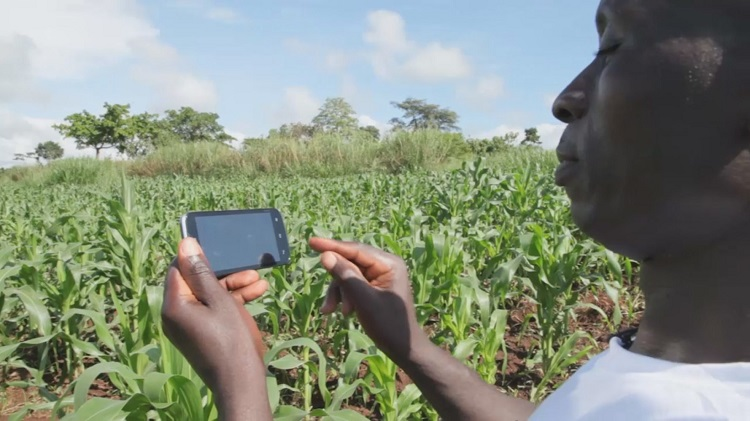 CTI Africa Life Mobile app Akorion-Youth-Village-Agent-Records-Crop-Growth-Using-A-Smartphone-Web-Size-e1497467134321