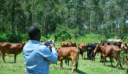 Katamba wants drone technology in livestock farming in Uganda