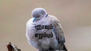 dove story in tamil
