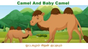 Camel And Baby Tamil Kids Story