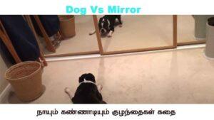 Dog Vs Mirror - Reaction and Response