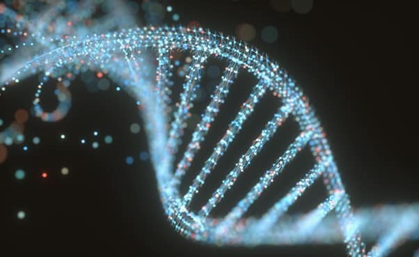 The organization's DNA (part 1): Skills> competencies> abilities