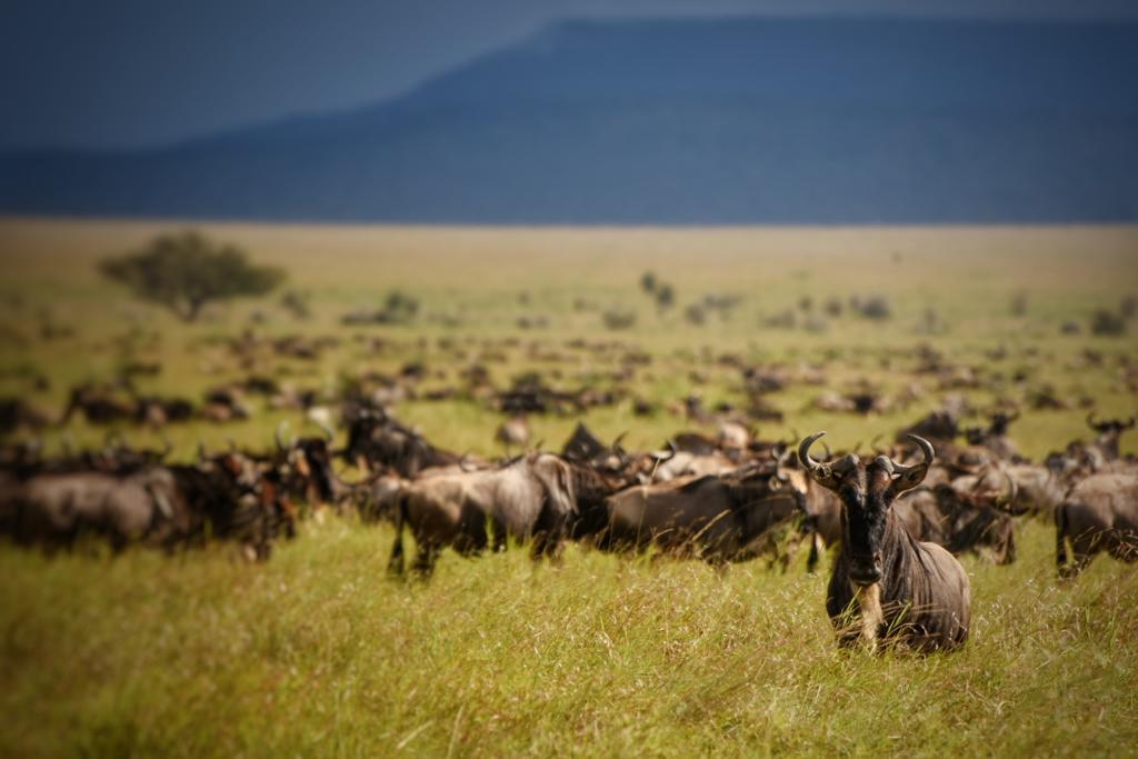 Multilingual Destination Marketing for Serengeti National Park from Poly Digital Marketing