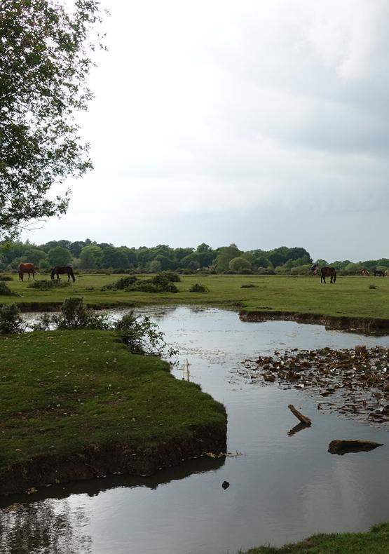 Janesmoor Pond