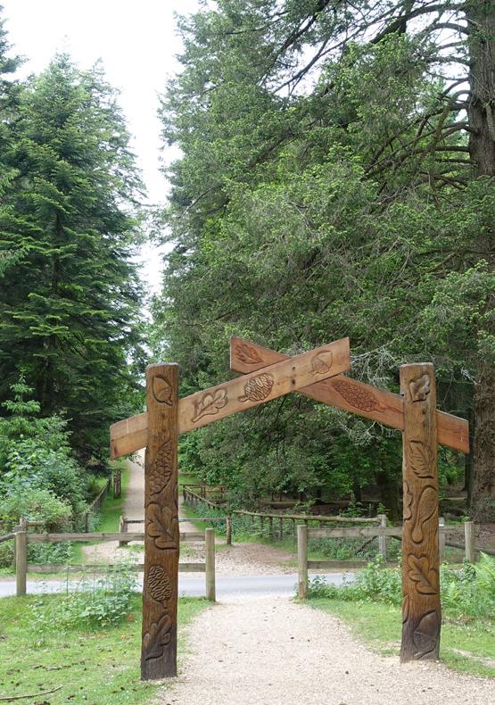 Tall Trees trail