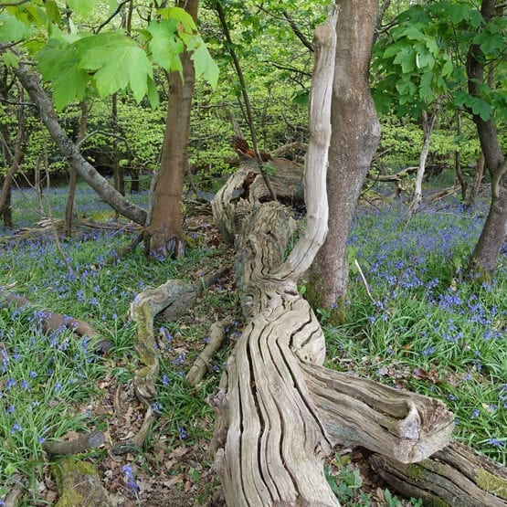 Roydon Woods