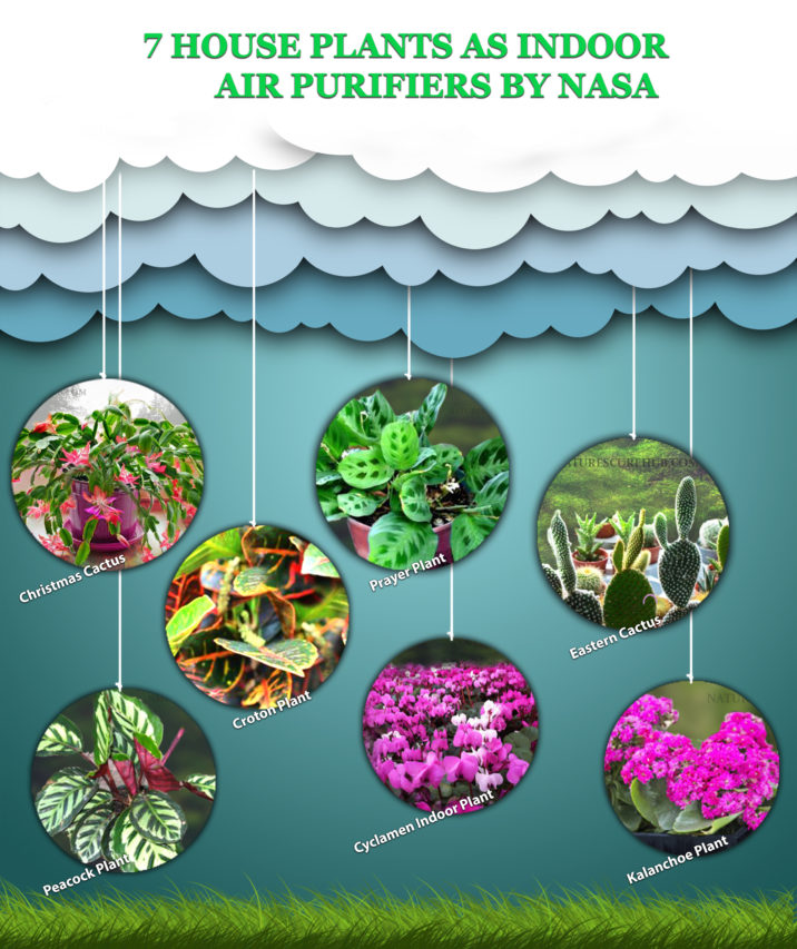 HOUSE PLANTS AS INDOOR AIR PURIFIERS BY NASA 1
