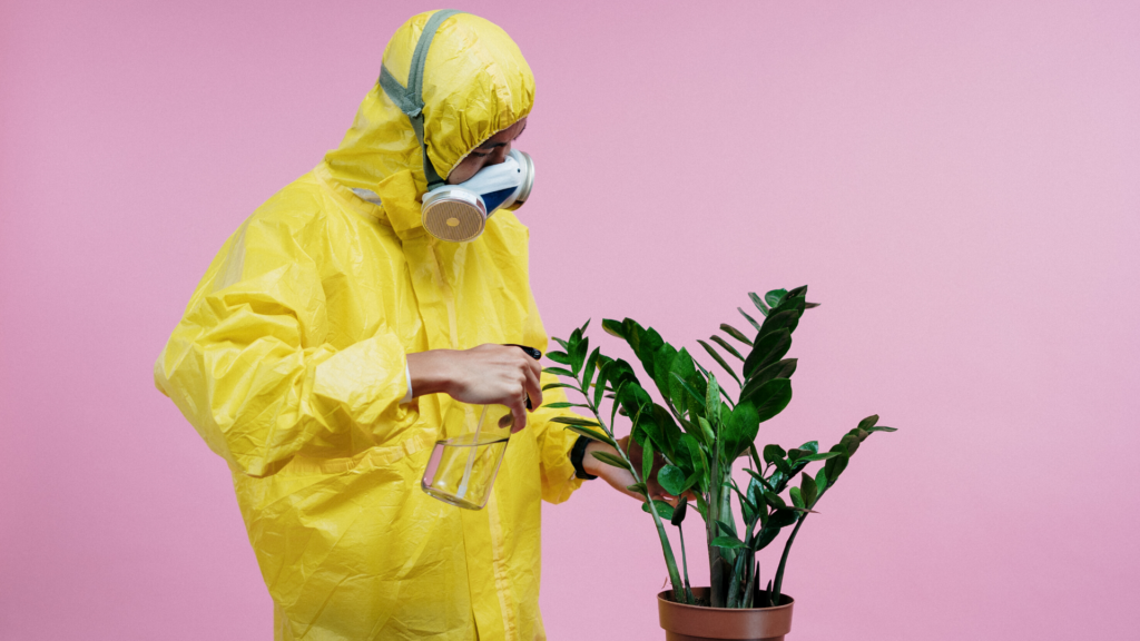 Man in PPE spraying a pot plant