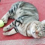 MTC Club Cat