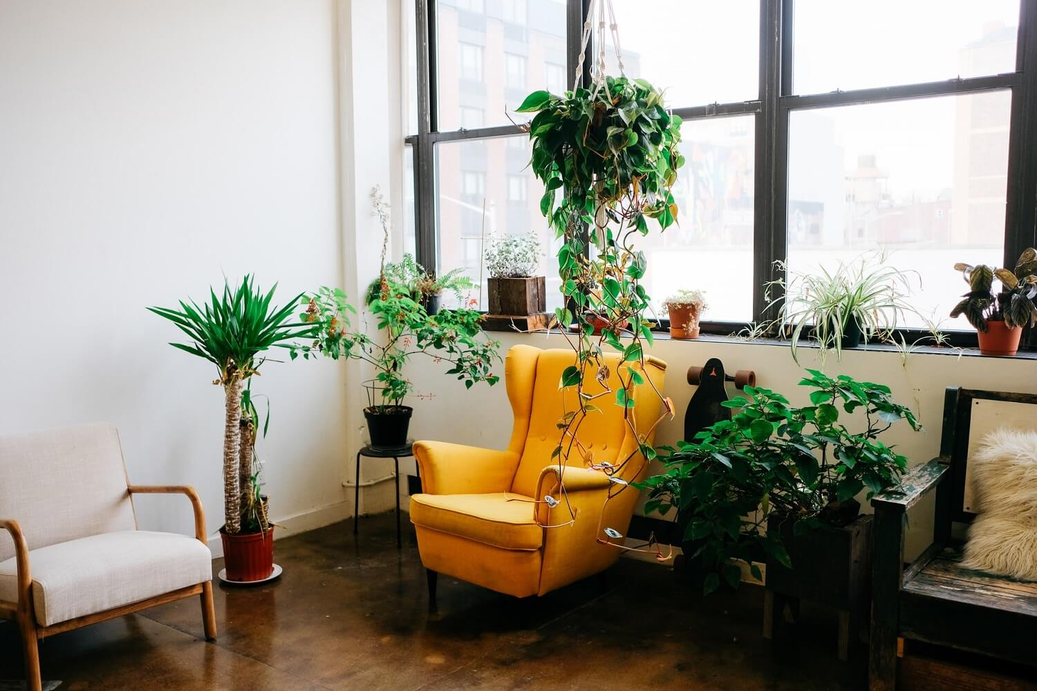 Office with yellow chair and plants