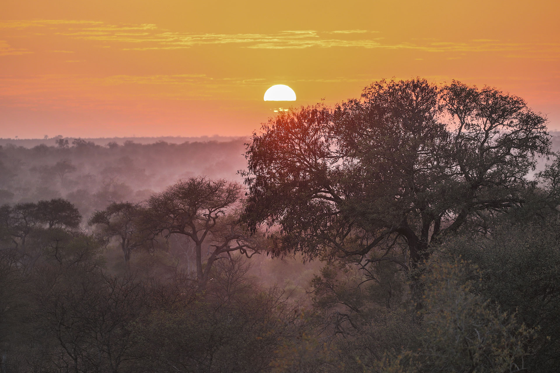 Tanda Tula - the landscape illuminated by the sunset in the Greater Kruger