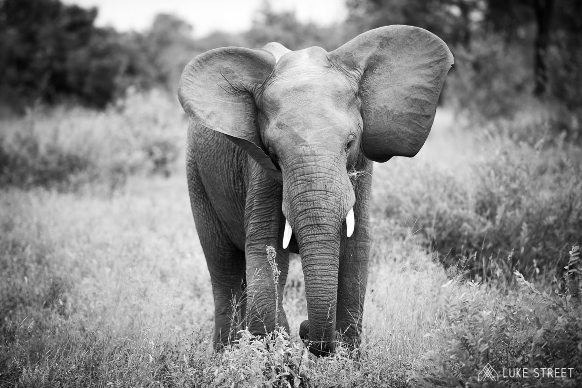 Tanda Tula - a moment with an elephant in the Greater Kruger