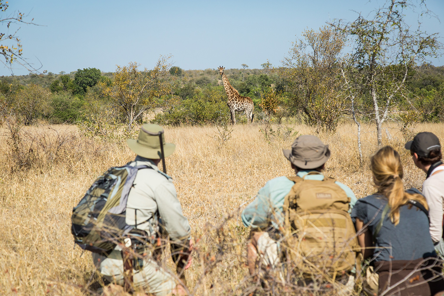 Tanda Tula Field Camp - guests and Ant admiring the beauty of wildlife on foot