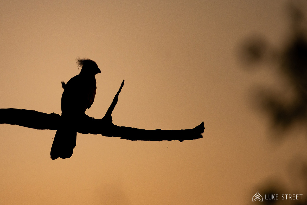 Tanda Tula - Lorrie at sunset in the Greater Kruger
