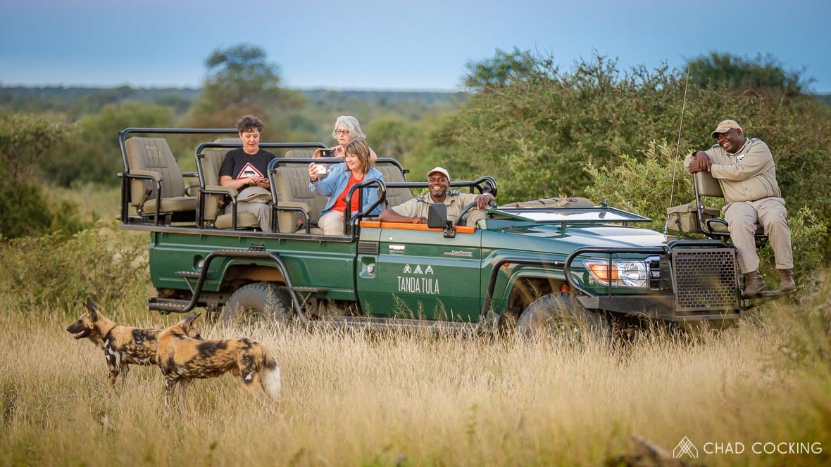 Tanda-Tula wild dogs with Scotch, Timbavati