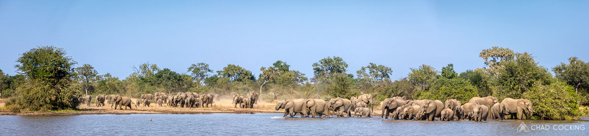 Tanda Tula - almost one hundred elephants descending upon Machaton Dam