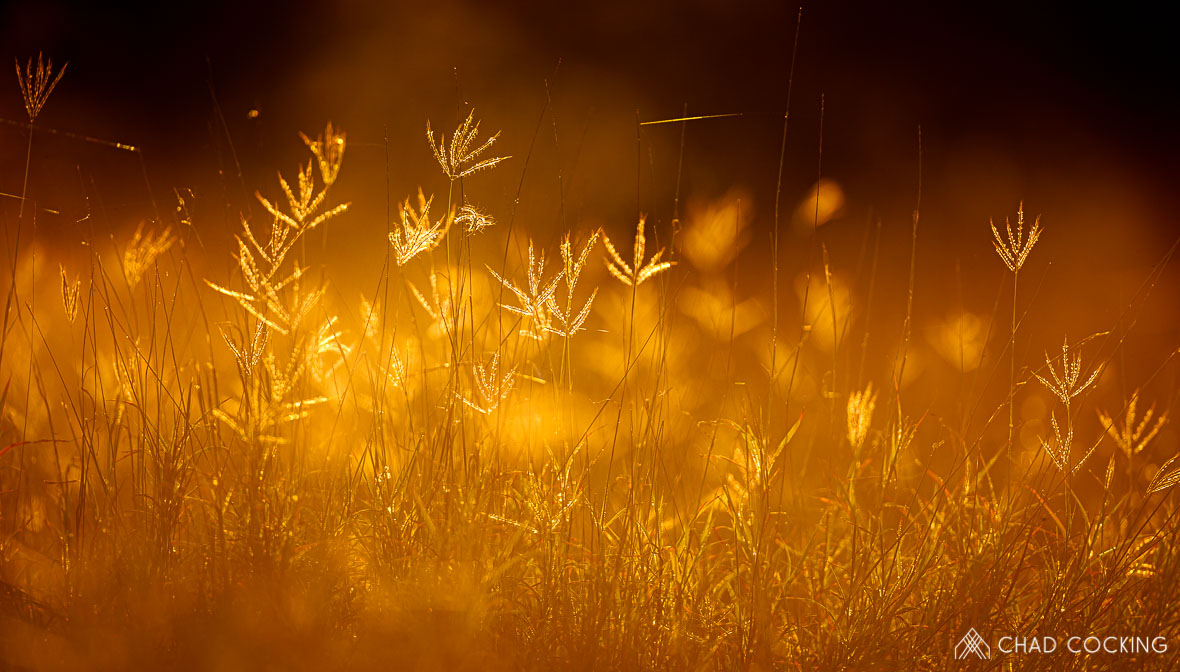 Tanda Tula - early morning grass, Tanda Tula, Timbavati, Greater Kruger