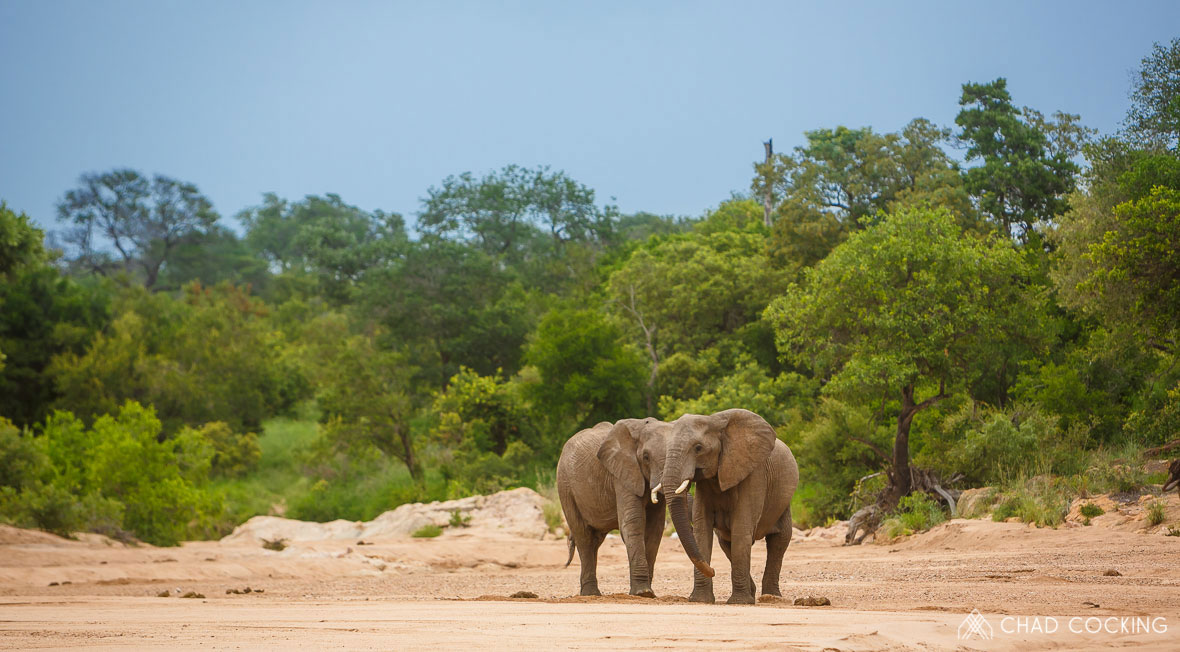Tanda Tula - elephants in the Greater Kruger, South Africa
