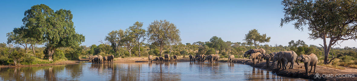 Tanda Tula - elephant herd drinking in the Greater Kruger on safari