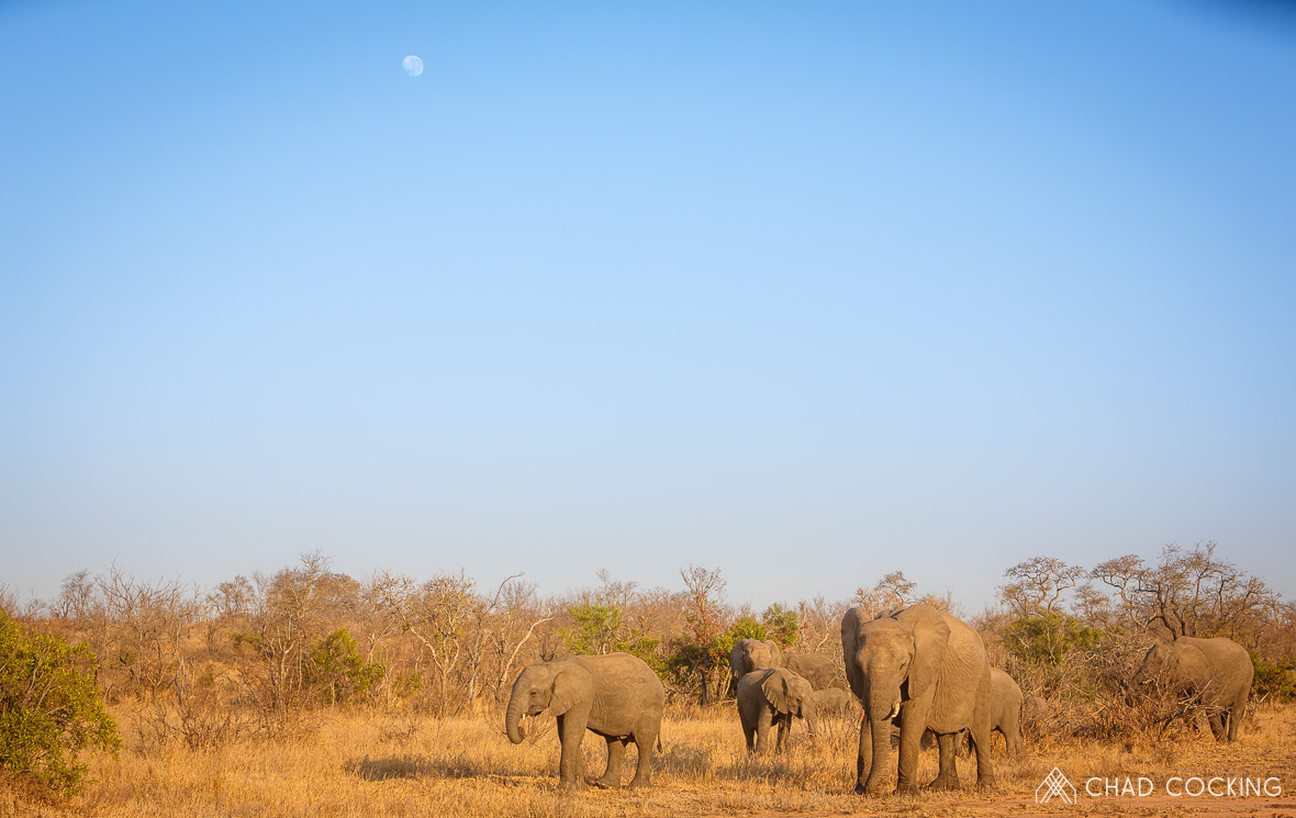 Elephant herd at Tanda Tula in the Timbavati Game Reserve, part of the Greater Kruger National Park, South Africa - Photo credit: Chad Cocking