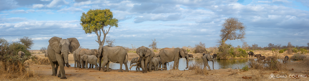 Elephants and Buffalo at the waterhole at Tanda Tula in the Timbavati Game Reserve, part of the Greater Kruger National Park, South Africa - Photo credit: Chad Cocking