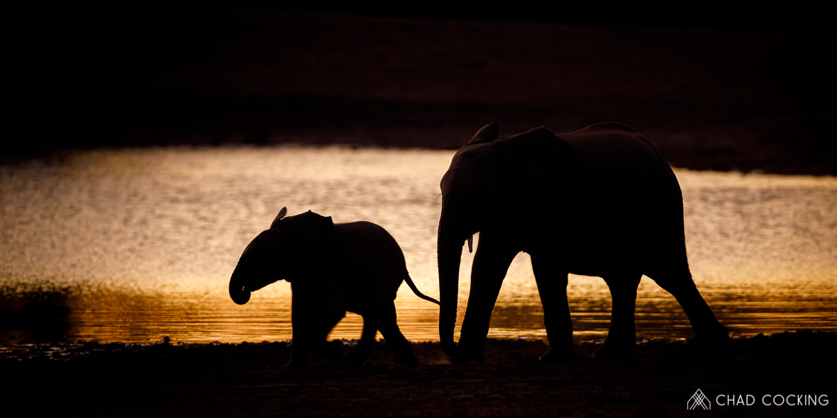 Tanda Tula - elephants at sunset in the Timbavati, South Africa