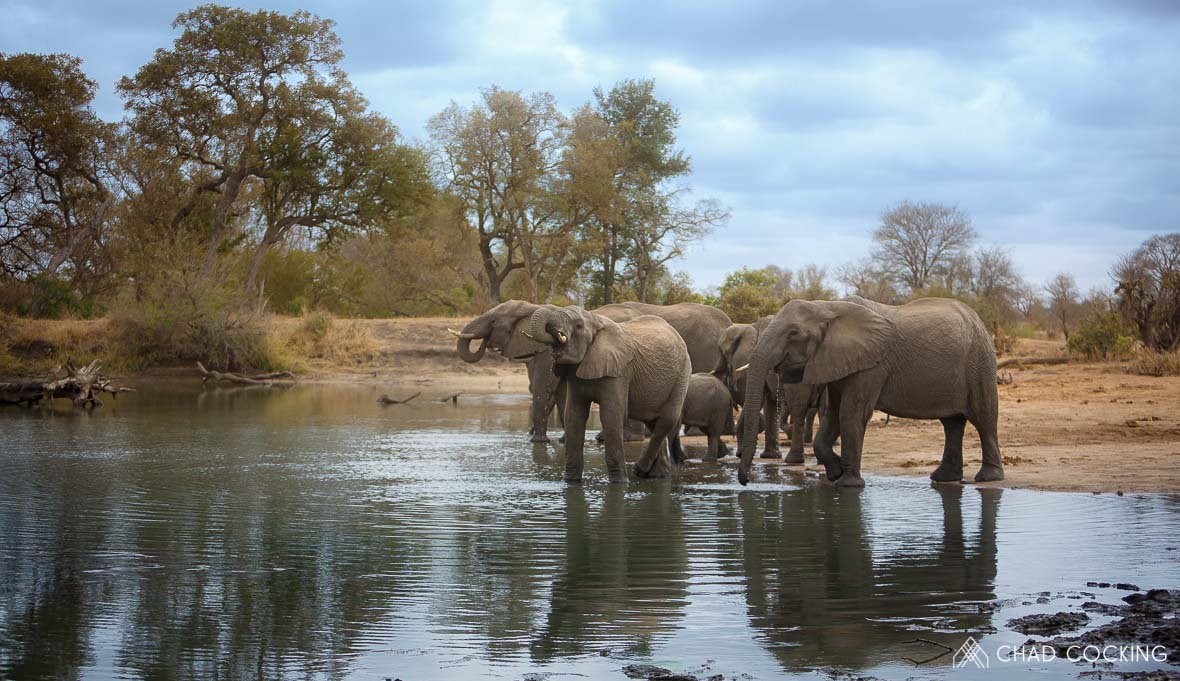 Elephants at the waterhole at Tanda Tula in the Timbavati Game Reserve, part of the Greater Kruger National Park, South Africa - Photo credit: Chad Cocking