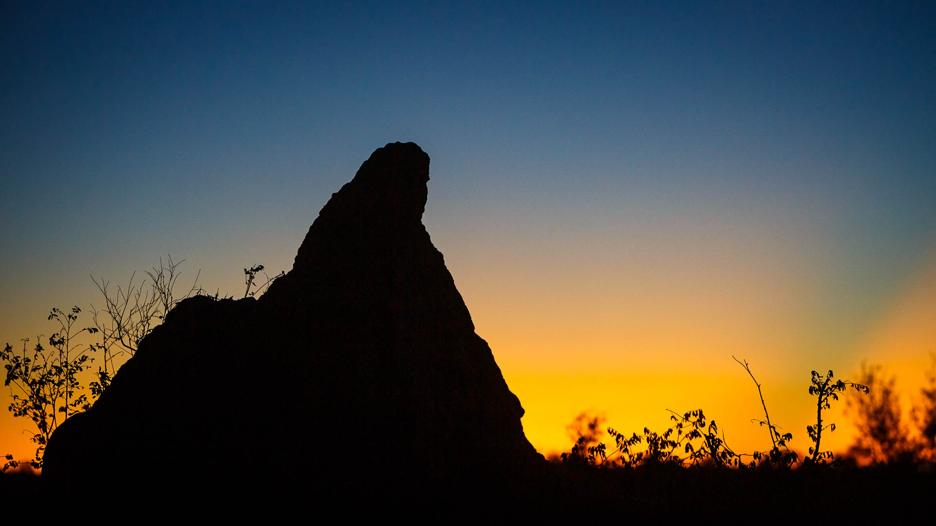 Tanda Tula - termite mound at sunset in South Africa