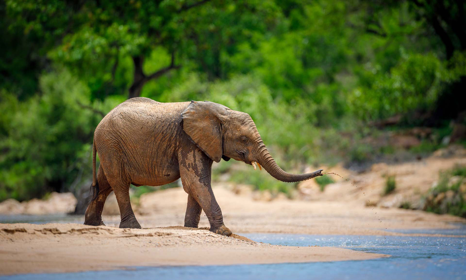 Tanda Tula - elephant in the Greater Kruger