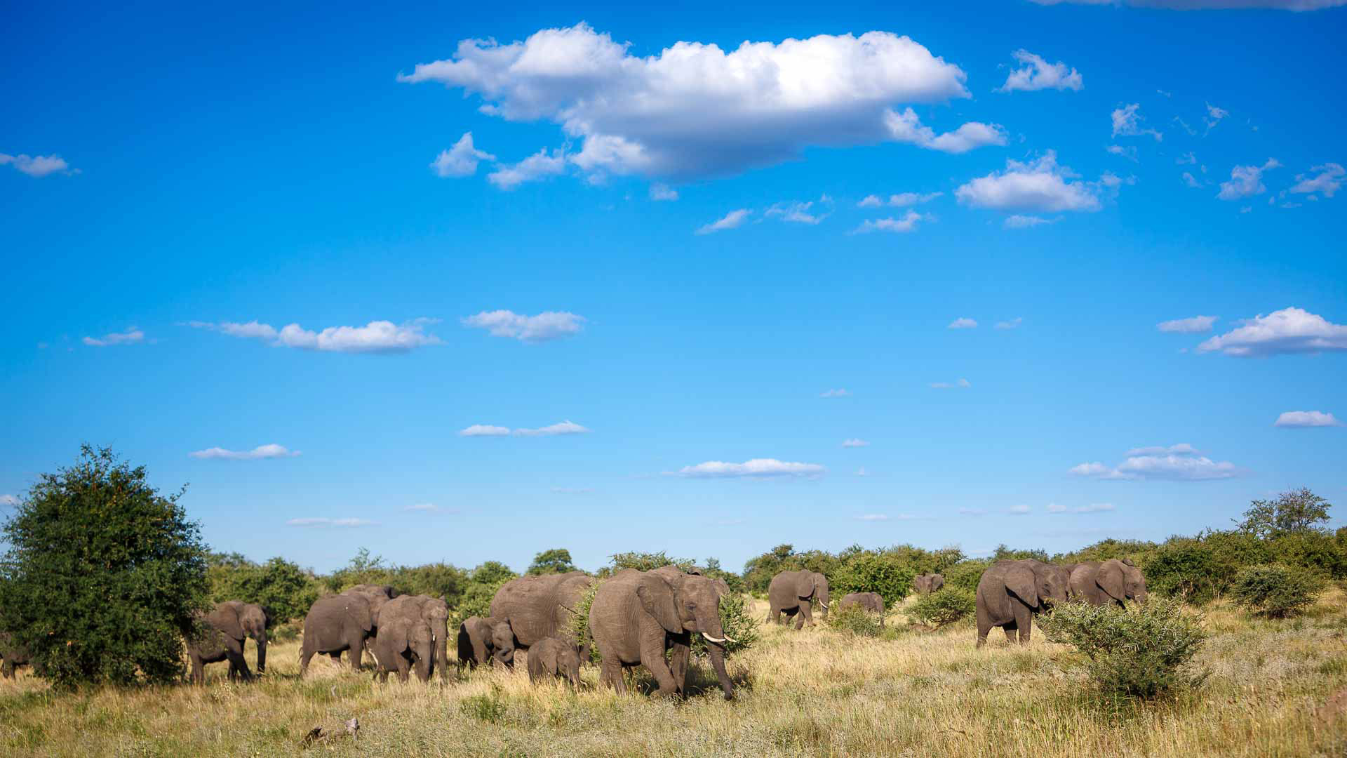 Tanda Tula - elephant herd in the Greater Kruger