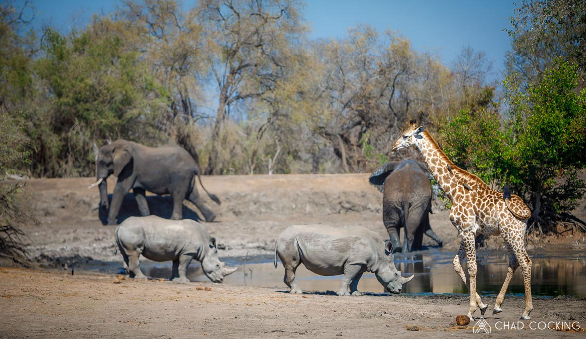 Tanda Tula - happy hour at the waterhole in the Greater Kruger, South Africa