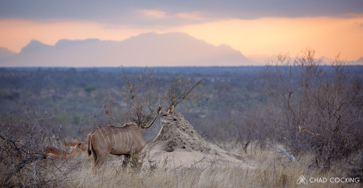 Tanda Tula - Kudu sunset in the Greater Kruger, South Africa