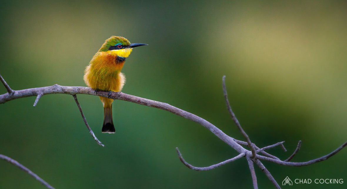 Tanda Tula - bee eater on a birding safari in the Greater Kruger, South Africa