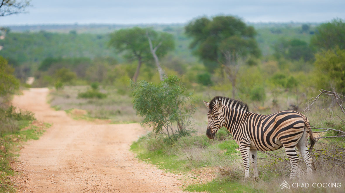 Tanda Tula - zebra on a luxury safari in Africa