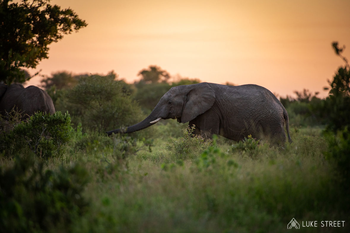 Tanda Tula - elephant at sunset in the Greater Kruger
