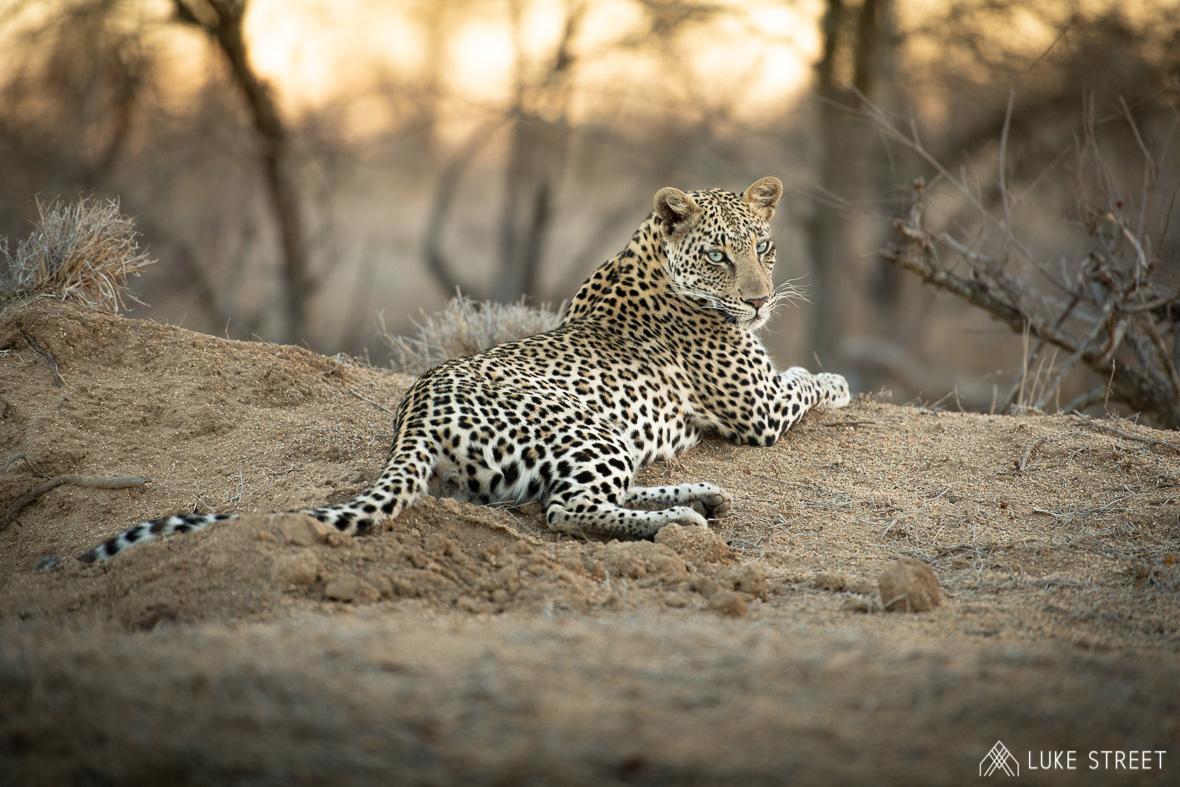 Tanda Tula - N'weti at sunset in the Greater Kruger, South Africa
