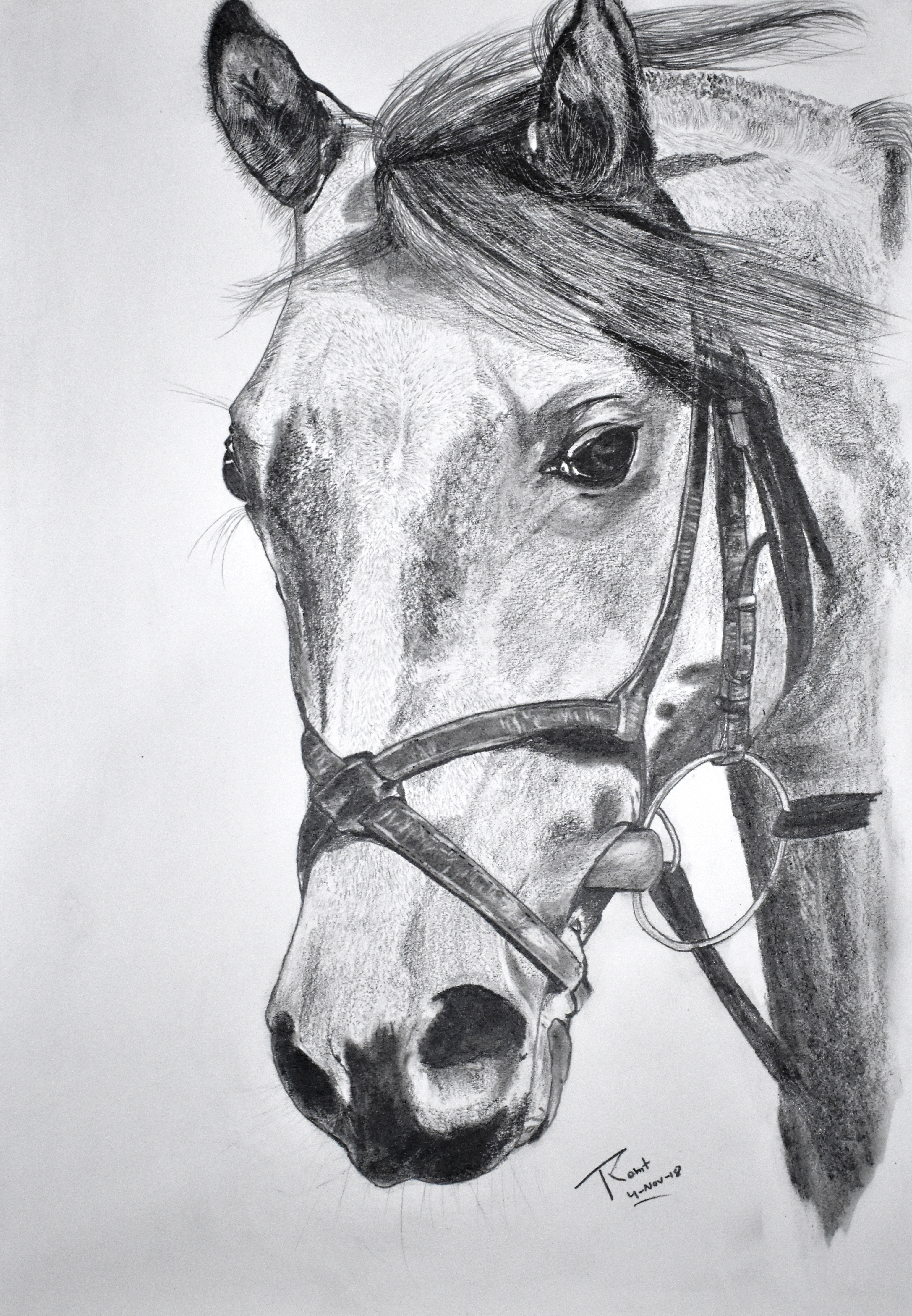 Horse 2, 200 GSM PAPER, 12″ x 18″ CHARCOAL