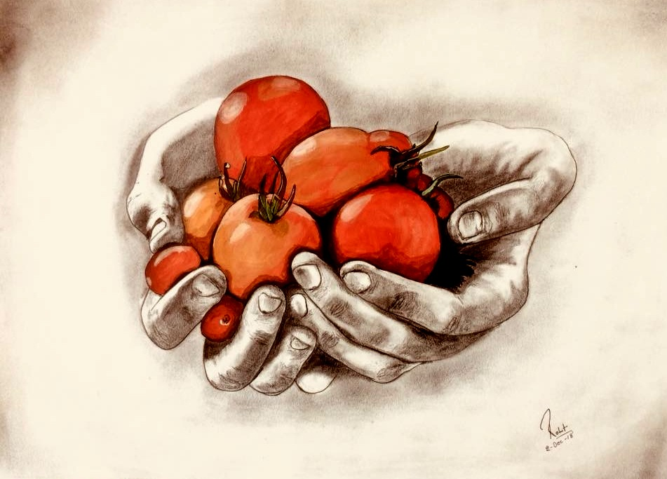 Tomatoes  200 GSM PAPER, 12″ x 18″  CHARCOAL / WATERCOLOUR.