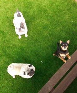 3 dogs