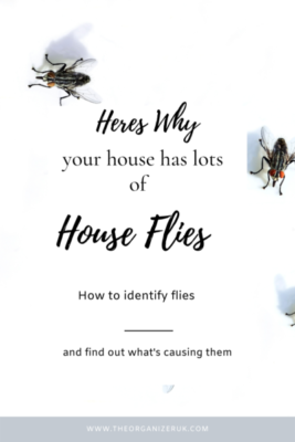 why are there so many flies in my house ?