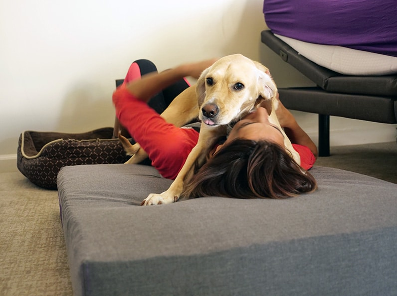 rana fits on rider's purple pet bed