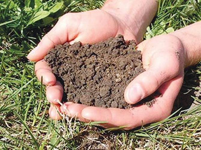 Soil Fertility : The Complete Guide